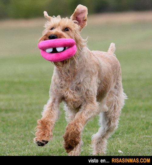 Perro con los labios con botox