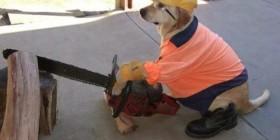 Perro trabajando