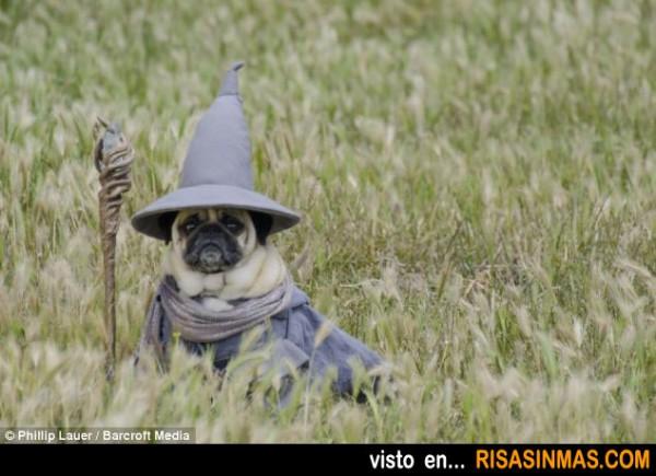 Si Gandalf fuera un perro...