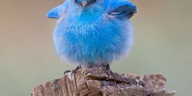 Twitter necesita una dieta urgentemente