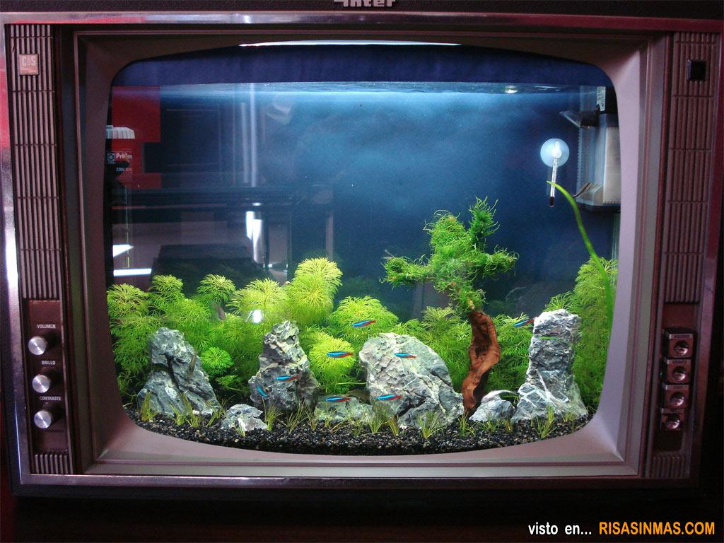 acuarios originales televisi n