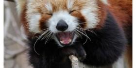 Animales riendo