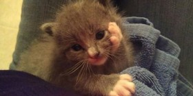 Gatito pensativo