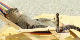 Cerrado por vacaciones: gato tomando el sol