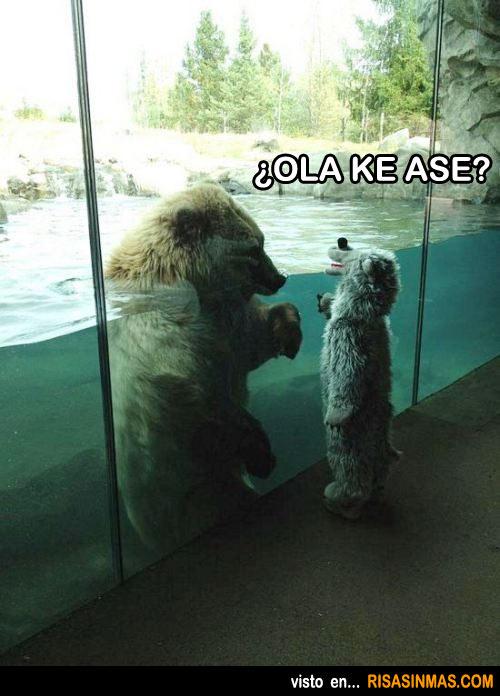 Conversación de osos