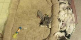 Cosas de mascotas, el uso de la cama
