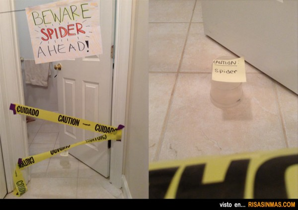 Cuidado, araña en el baño