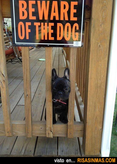Cuidado con el perro...