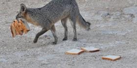 Dejar de tirarme pan por favor