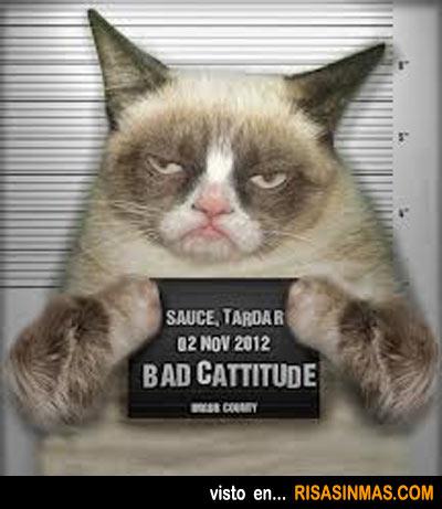 Detenido el gato cabreado