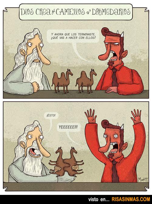 Dios crea los camellos y los dromedarios