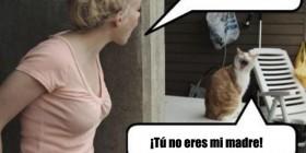 Discusión entre un gato y su dueña