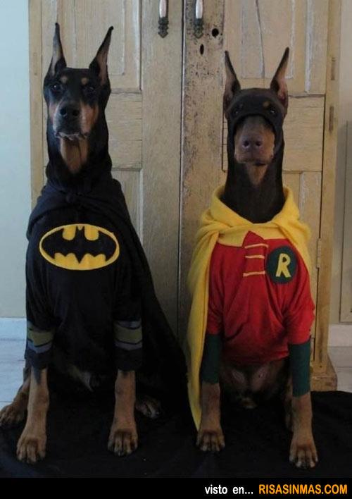 Disfraces perrunos: Batman y Robin