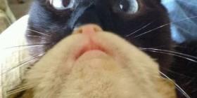 Dos gatos en uno