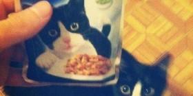 El gato Felix come su propia comida