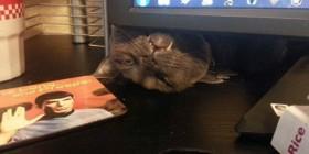 Ese momento en que tu gato reclama tu atención