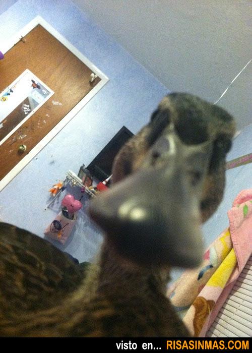 Pato haciéndose autofoto para Facebook