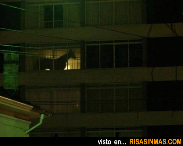 Fotos inexplicables: Caballo en una terraza