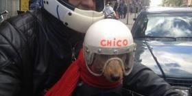 En Francia los perros usan casco