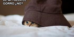 Gatito con gorro