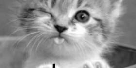 Gatito guiñando el ojo