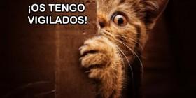 Gatito espiando