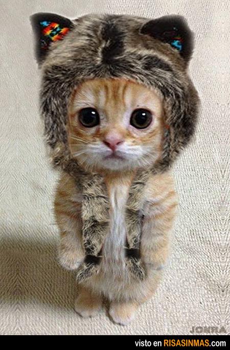 Gatito disfrazado de león