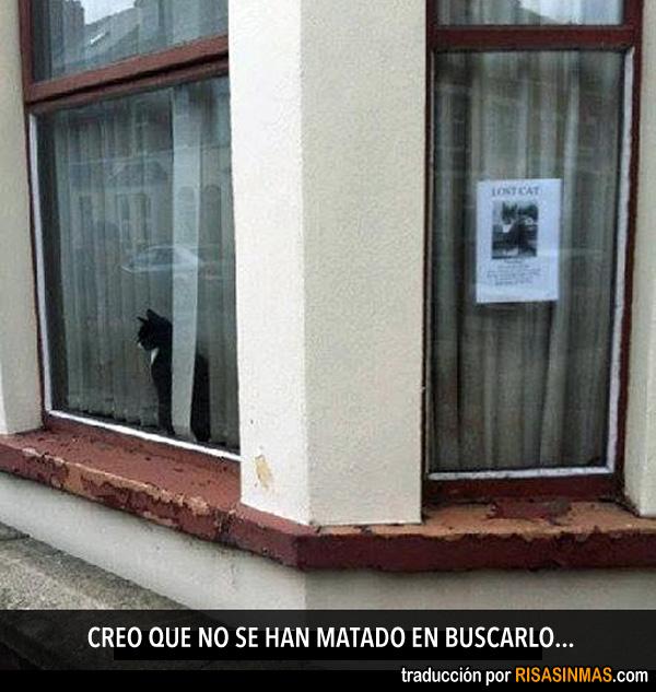 ¿Gato desaparecido?