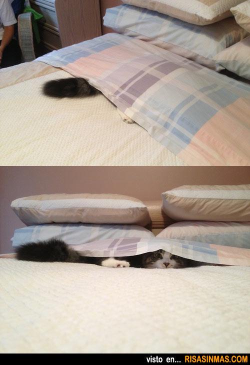 Gato jugando al escondite