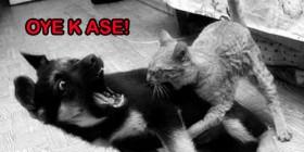Ataque de gatito a un perrito