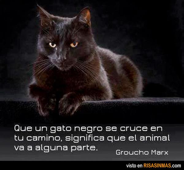 Si se te cruza un gato negro