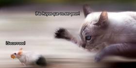 Gato persiguiendo a un ratón