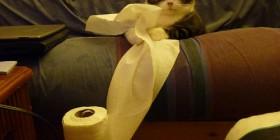 Gato preparado para una diablura