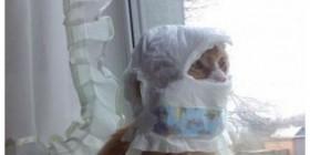 Gatos atrapados dentro de cosas