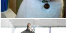 Gatos con cara de tontos