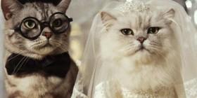 Gatos recién casados