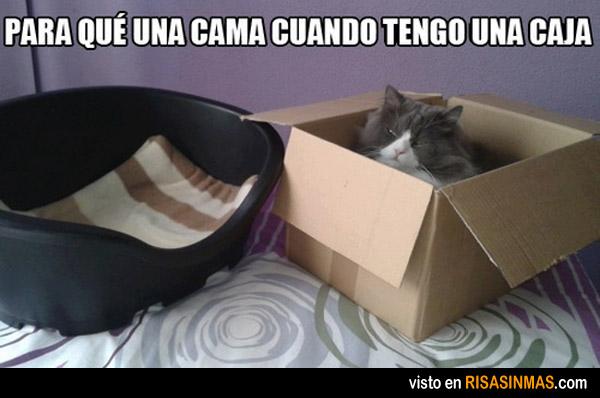 Gatos y cajas, son los unos para las otras