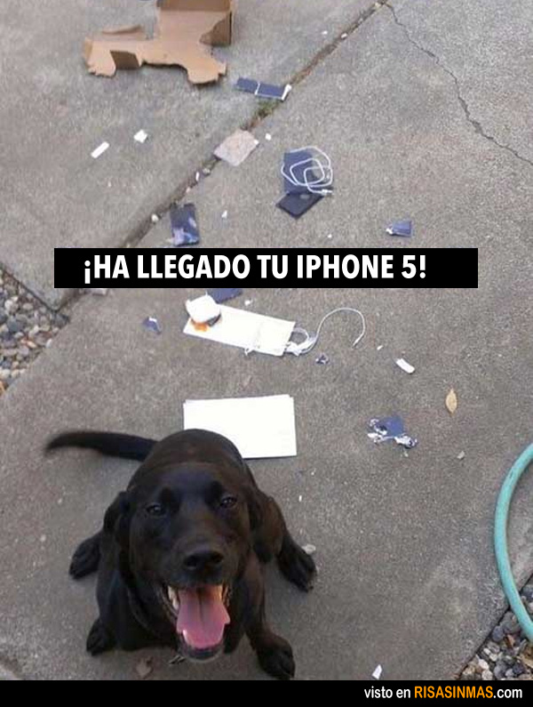 Ha llegado tu iPhone 5