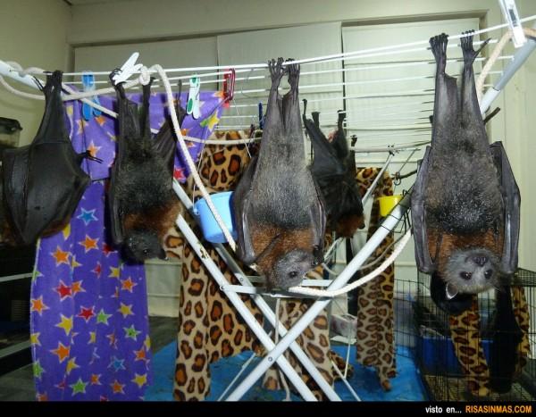¿Has tendido la ropa? ¿Y los murciélagos?