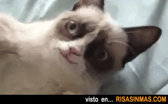 Increíble imagen del gato cabreado sonriendo