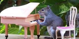 La ardilla pianista