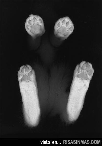 La típica foto de la fotocopia