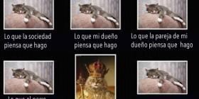 La vida de un gato