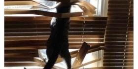 Los gatos y las persianas