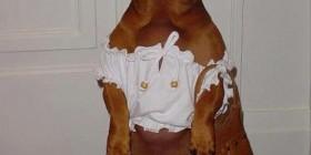 Mi perra cada día viste peor