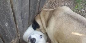 Mis vecinos tienen nuevo perro