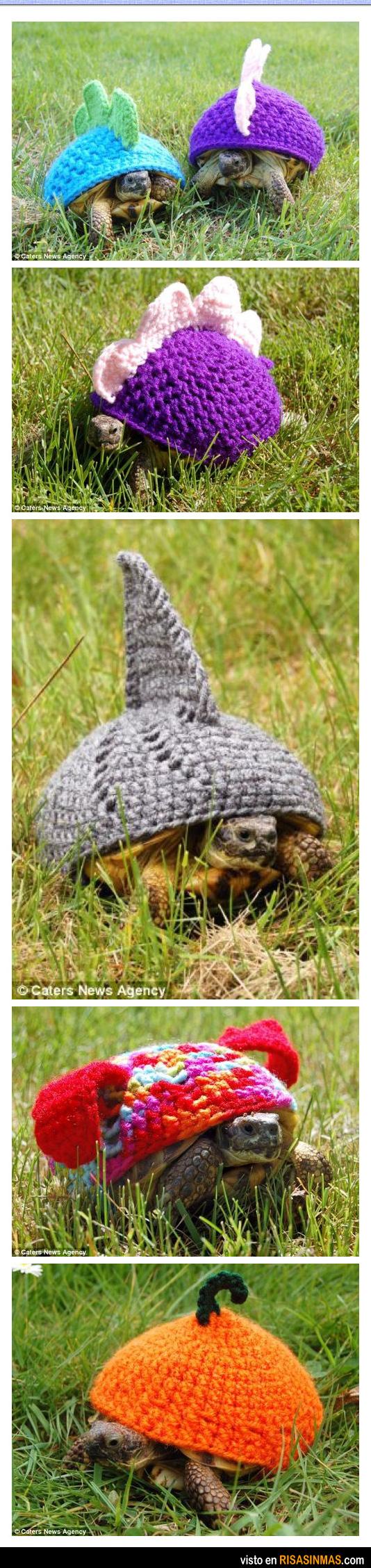 Última moda para tortugas