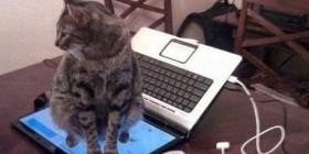¿Que no me siente sobre el teclado?