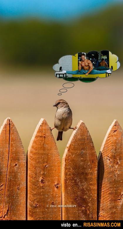 Pájaro fan de Jean-Claude Van Damme