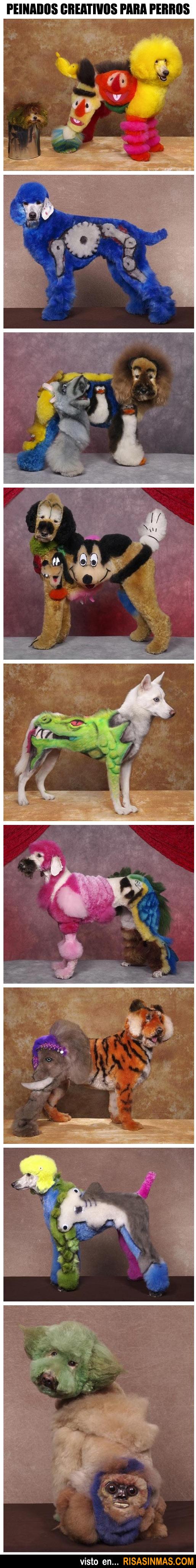 Peinados creativos para perros